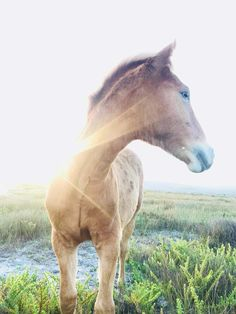 Latest news about the Wild Horses at Rooisand Nature Reserve, near Kleinmond Sa Tourism, Nature Reserve, Wild Horses, Countries Of The World, South Africa, Whale, Old Things, News, Travel