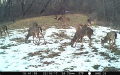 Do you need to increase deer numbers on the land you hunt? However, if you are waiting for your State's game department Whitetail Deer Hunting, Deer Hunting Tips, Hunting Boots, Hunting Stuff, Deer Blind Plans, Deer Feeders, Big Deer, Bow Hunter, Do You Need