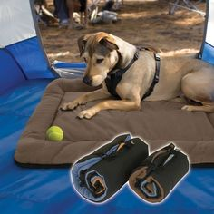 I like this  What do you Need to Bring When Camping with a Dog?