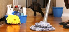 Organização - Cronograma de limpeza doméstica  Como fazer um cronograma de limpeza diária Essa é uma questão que mexe muito com mulheres e homens…  http://www.meusdoisminutos.blogspot.com.br/ #organização   #organizaçãodolar   #limpeza   #faxina   #cronograma   #mulher   #dicas   #lar   #casalimpa   #Agoravai   #TMJ   #congatulations