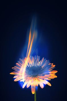 "Burning Flower with writing around it saying ""what is to give light must endure burning"""