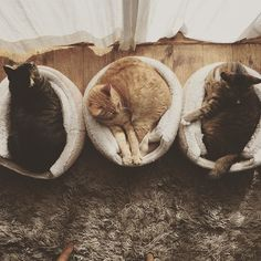 あっと言う間にとけてしまった雪✽✽✽ . おひさまが顔を見せてくれて良かったね。 . 何を思うか…黄昏るレオン。 . また太っちゃったかな⁇とマカロンハウスがきついことを気にするゆず。 . やっぱり女子♡念入りに毛繕いするみぃみ。 . 思い思いにひなたぼっこする3にゃんこ達。平和だなぁ(=^ェ^=) . #愛猫 #ねこ #ネコ #cat #cats #にゃんこ #3にゃんこ #にゃんすたぐらむ #ニャンスタグラム #ねことの暮らし #ねこのいる生活 #ねこのいる暮らし #茶トラ #茶トラ男子部 #きじとら #きじとら猫 #くつしたねこ #ひなたぼっこ #どーしてそんなに可愛いの