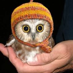 Baby owl in a hat.
