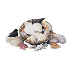 "Genuine Seashell Assortment - OrientalTrading.com Assorted 1"" - 3"" seashells in a 6"" basket. (Approx. 20 - 25 shells per 6"" basket, shrink-wrapped) $4.25"