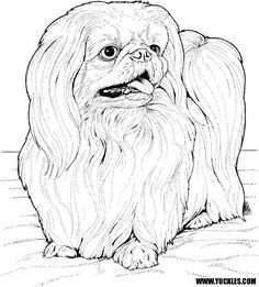 Lhasa Apso coloring page from Dogs category. Select from 31927 printable crafts of cartoons, nature, animals, Bible and many more. Dog Coloring Page, Animal Coloring Pages, Coloring Book Pages, Coloring Pages For Kids, Colouring Sheets, Kids Coloring, Animal Drawings, Art Drawings, Pyrography Patterns