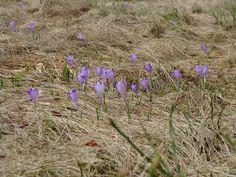 fotos&travels : Zwiastuni wiosny