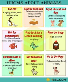 List of Idioms about Animals in English
