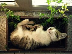 Parsley is comfortable, says our little cat, Sprout