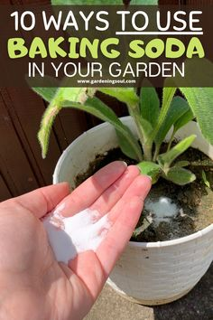 Ants In Garden, Veg Garden, Lawn And Garden, Garden Plants, Indoor Plants, Garden Soil, House Plants, Container Gardening, Gardening Tips