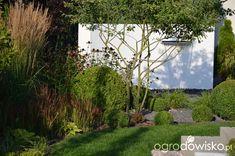 """Jak """"ożywić"""" mój szmaragdowy ogród - strona 1793 - Forum ogrodnicze - Ogrodowisko"""