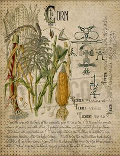 Magic plant knowledge has a long history and has a place in the modern witches Book of Shadows. Book of Shadows page. Witchcraft Books, Magick Spells, Hedge Witchcraft, Magic Herbs, Herbal Magic, Witch Herbs, Witch Spell, Modern Witch, Book Of Shadows