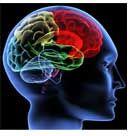 Grey Matter Matters: Using Herbs for Deep Nerve Tissue Support