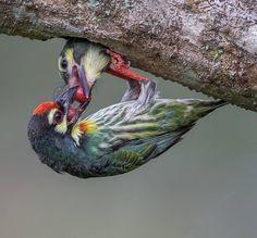 Amazing Bird Photography by Johnson Chua #inspiration #photography