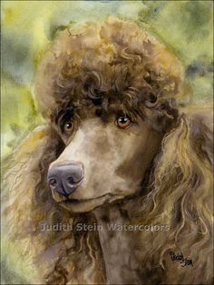 POODLE BROWN STANDARD Dog 15x11 Giclee Watercolor Print by k9stein, $40.00