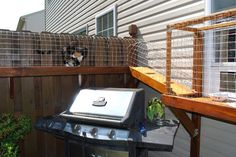 Pretty amazing outdoor cat enclosures! Let your indoor kitty out, without the worry!