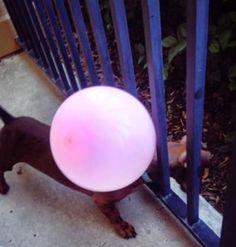 19 Lifehacks, die jedem Hundemenschen das Leben einfacher machen werden