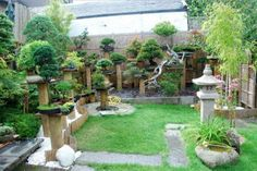 Outdoor Bonsai Trees in Garden