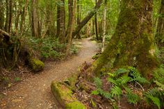 Track To Ralph Falls, Mt. Victoria, Australia Mural - David Wall| Murals Your Way