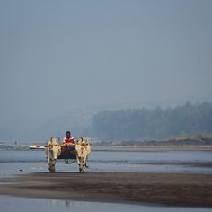 Beach life in kokan,india