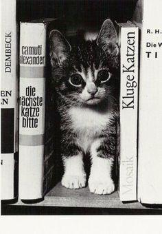 Kluge Katzen! #cat #cats #cute #katze #katzen #süß #weltkatzentag