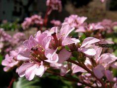 A legújabb fotóimból készítettem az idei első, tavaszhoz kapcsolódó bejegyzésemet.  #fotózás #photography #tavasz #autumn #flower #petal #sunshine #colorful #blooming #garden #plant Plants, Love, Plant, Planets