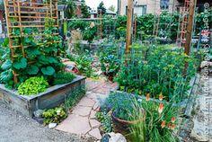 vegetable garden trellis ideas inexpensive   Garden Trellis Gallery