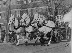 Engine 18's horse-drawn steam pumper on Harvard St., Dorchester, circa 1917.