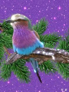 Птичка - анимация на телефон №1383405