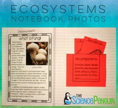Science Notebook Pic-- Decomposers and Fungi $