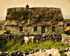 THATCHED ROOF COTTAGE Ireland Photo Fine Art by WhoIsCharley, $24.00