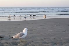 The Isle of Palms, near Charleston, SC, features water fun, family-friendly events and a laid-back vibe. Find things to do in the Isle of Palms!