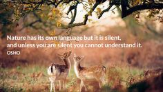 Nature has its own language but it is silent, and unless you are silent you cannot understand it.  OSHO  #nature #language #silent #understand #osho