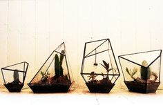 Assembly New York's Handmade Geometric Terrariums Give a New Angle to Indoor Gardening | Inhabitat New York City