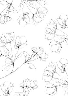 Illustrated botanical pattern