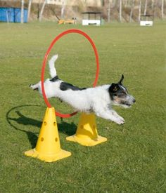 Agility Dog Training Equipment