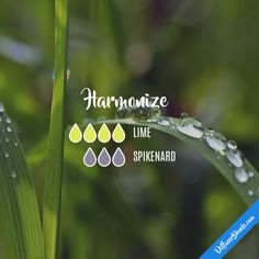 Harmonize - Essential Oil Diffuser Blend