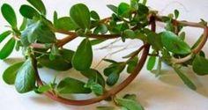 La Verdaloga! El recientemente descubierto SUPERALIMENTO que es una bomba de Antioxidantes y Omega 3!