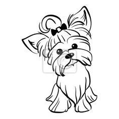 Yorkshire naklejki ścienne na wymiar • odizolowany, pies, szczeniak • strona 2 | myloview.pl