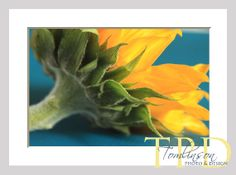 Sunflower Yellow and Teal Kitchen Wall Art, #Photography Prints by TomlinsonPhotoDesign on Etsy, $10.00