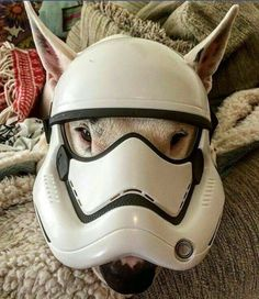 May the Bullie be with you.