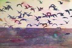 Gaviotas remontando vuelo