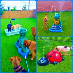The four-legged kids love the mobile and portable splash pad line too.  Just attaches to a garden hose, so they have fresh water, since they love to drink as much as play.  From crate to the puppies playing in the splash pad in just minutes.