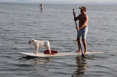 My buddy and I out for a ride ! I just love paddle boarding.
