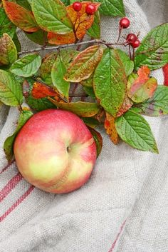 Beautiful photo of apple with leaves and grain sack Apple Farm, Apple Orchard, Apple Harvest, Harvest Time, Apple Tree, Red Apple, Fruit And Veg, Fruits And Veggies, Photo Fruit