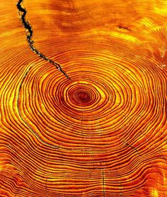 Shades of orange - wood Texture Photography Tree Trunks Patterns In Nature, Textures Patterns, Foto Macro, Pot Pourri, Stoff Design, Tree Rings, Orange You Glad, Orange Crush, Art Furniture