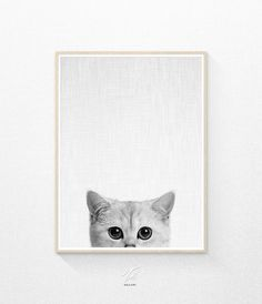 Cat Print Baby Animals Prints Nursery Animal Prints by TaiPrints