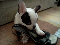 Mama i found a new toy~