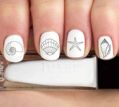 Seashell Beach Nail Decals / Stickers. Featured on Completely Coastal FB: https://www.facebook.com/CoastalBeachBlissLiving/photos/a.128908803835246.19702.128847517174708/1112775618781888/?type=3&theater