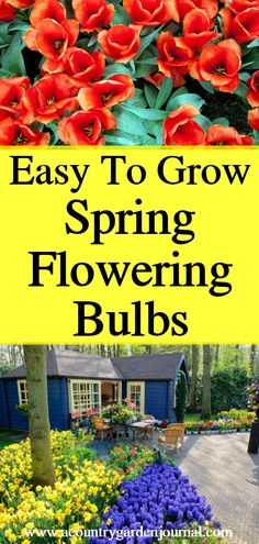 A combination of Tulips, Hyacinths, and Daffodils is a welcome sight after months of snowy weather. Learn how to create a showy display of Spring blooms. #gardening #flowers #bulbs #tulips #daffodils #hyacinths #cuttingflowers #fragrantflowers #bouquets #acountrygardenjournal