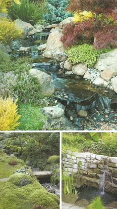 Mystic Water Gardens | Mystic | Residential | Pinterest | Gardens, Pond And  Water Features